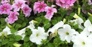 flowersbanner